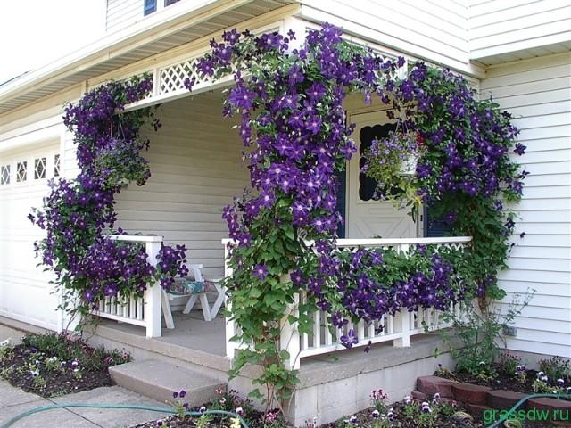 Душистые растения в саду