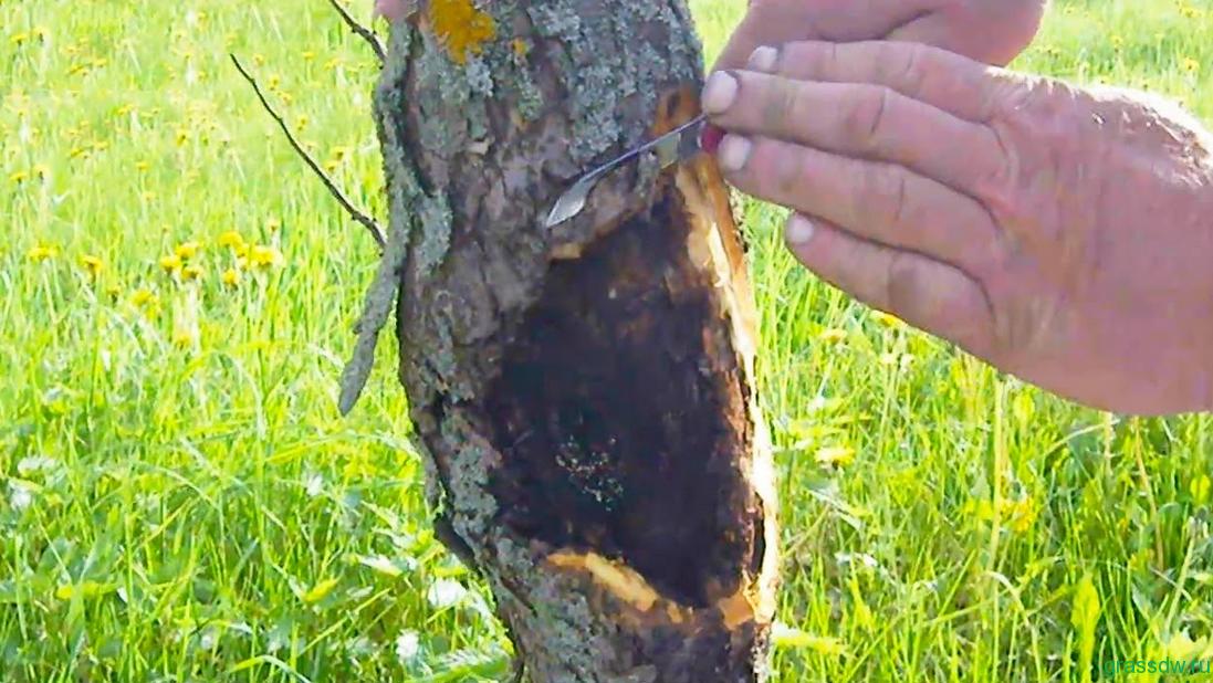 Лечение деревьев ранней весной