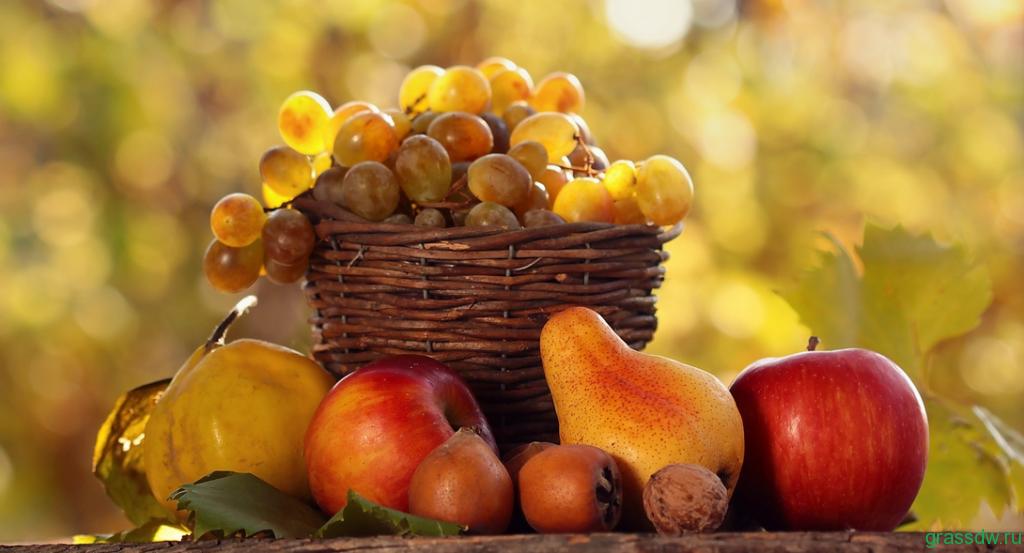 Опыт выращивания винограда