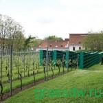 Подготовка почвы под виноградник