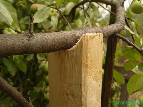 для защиты урожая от сбивания ветром