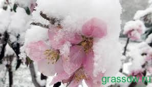 Борьба с весенними заморозками