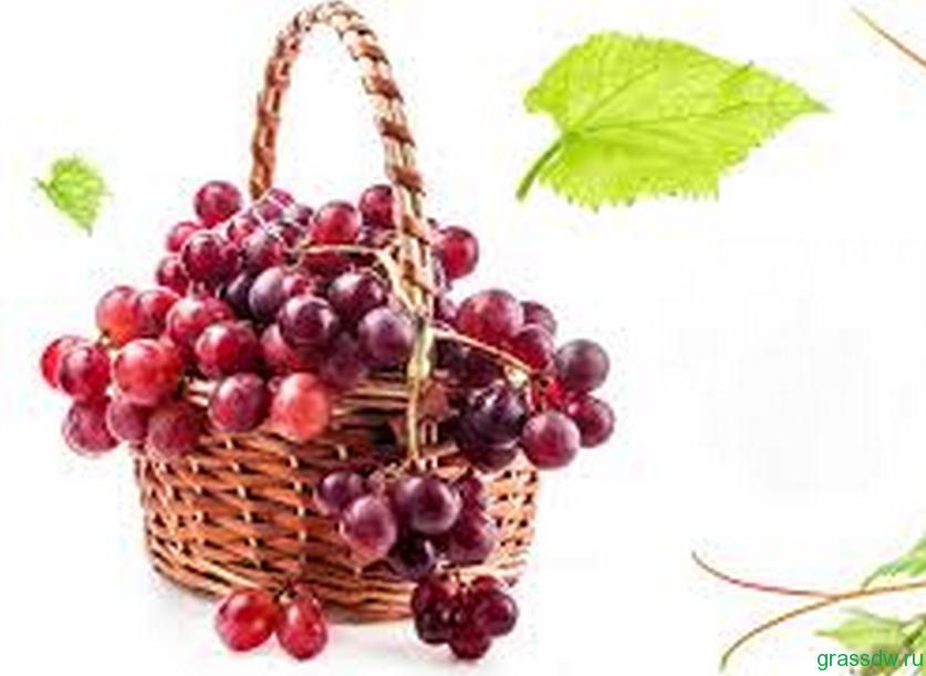 красивой гроздью