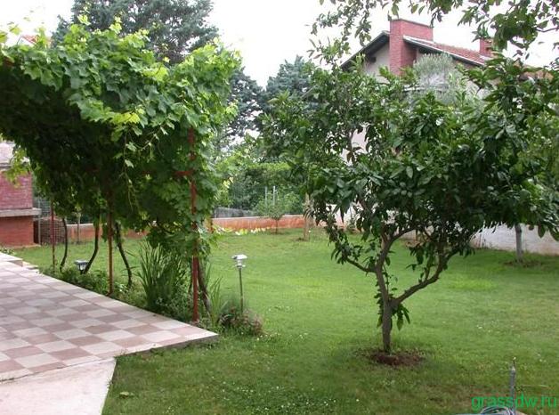 ремонт в плодовом саду