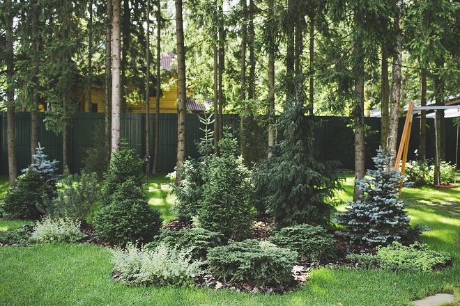 Декоративный лес на участке