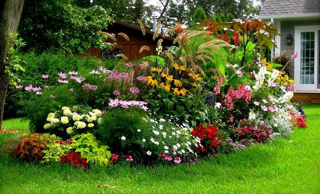 Деревья и кустарники на участке цветник