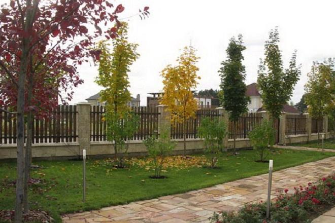 Деревья и кустарники на участке