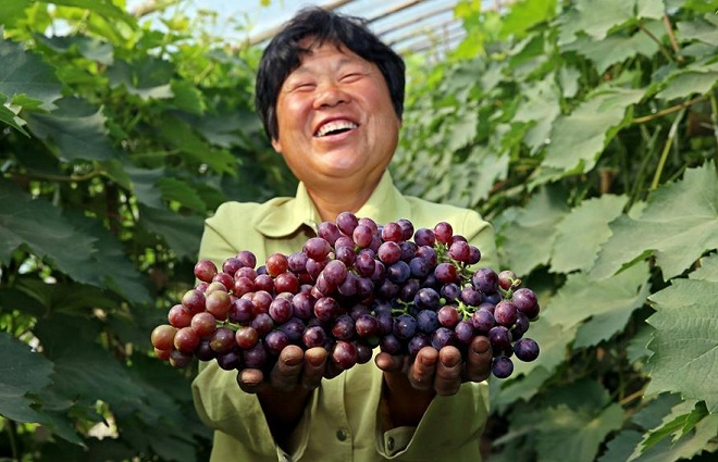 Влияние красного винограда на тонус организма